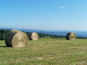 Twin Mtn Hay Bales 1 Ref Photo