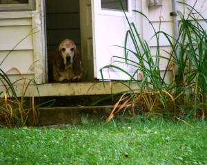 Truman at the door