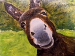CITR Donkey
