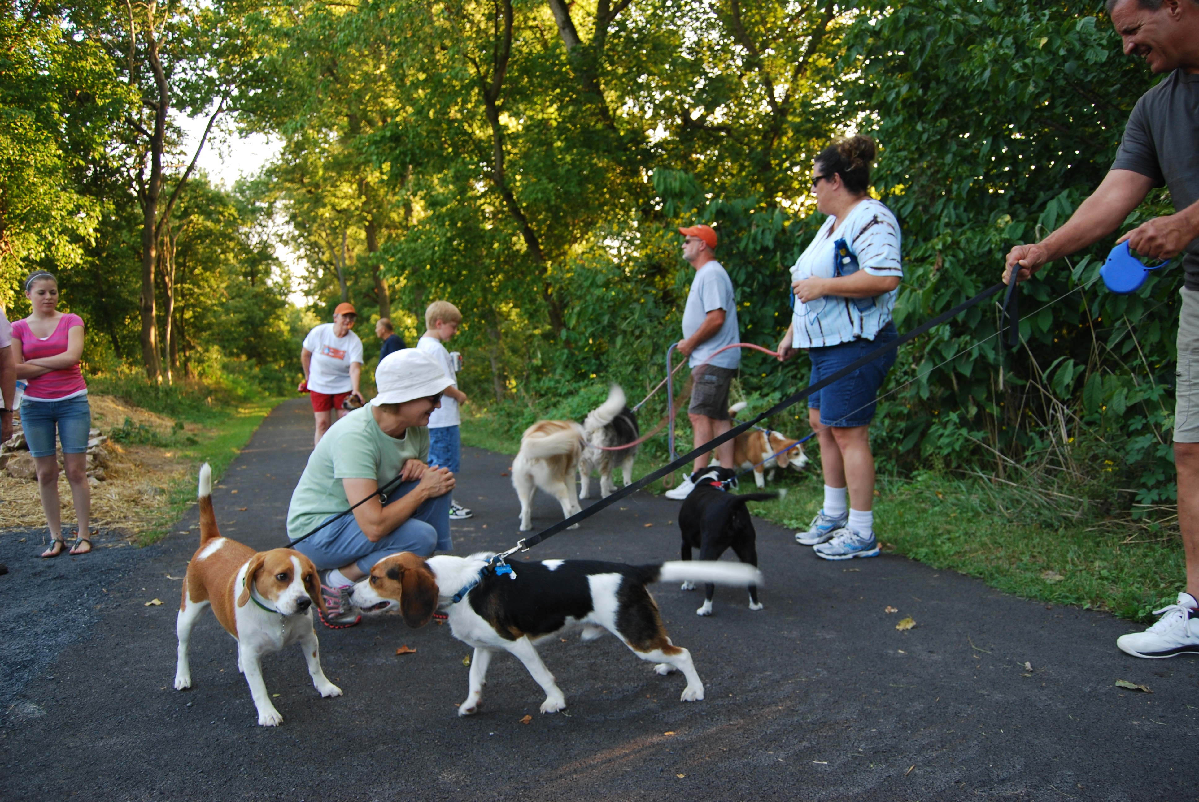 Tatterson Park Dogs
