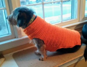 Lincoln in his Orange Sweater