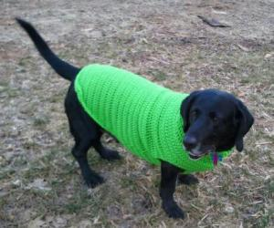 Jed in a Green Crocheted Sweater