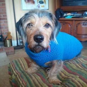 Lincoln looking handsome in a blue sweater