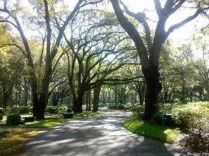HHI Trees