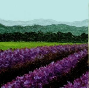 Rows of Lavender II
