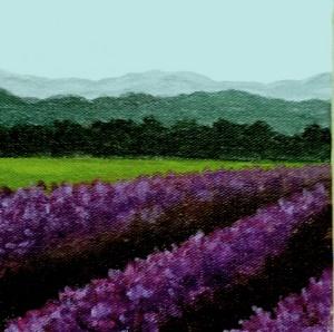 Rows of Lavender II