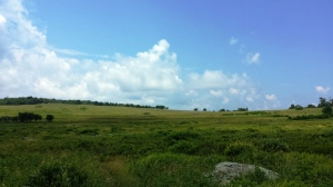 Big Meadow-Shenandoah National Park