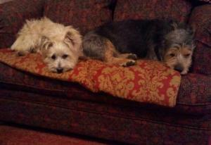 Mamie and Lincoln Resting