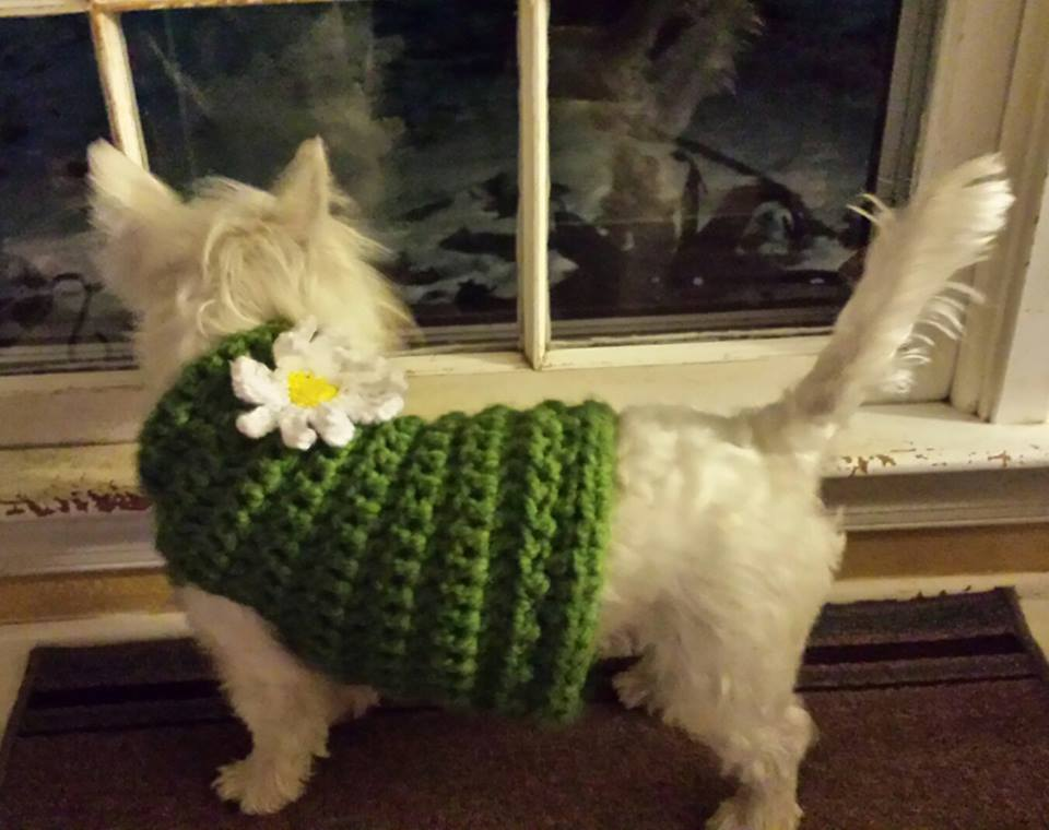 Crocheted Dog Sweater Pattern A Place For Learning
