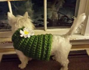 Daisy's New Sweater