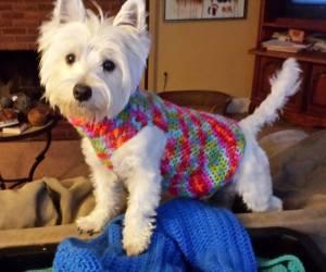 Daisy wearing Mamie's sweater.  It is a little big.