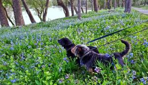 Bluebell Reference Photo with Lincoln and Jed