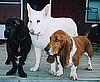 Jeffie, Boo & Truman