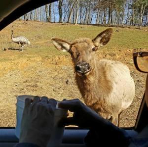 SP Deer