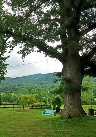 Nimrod Tree Swing 1