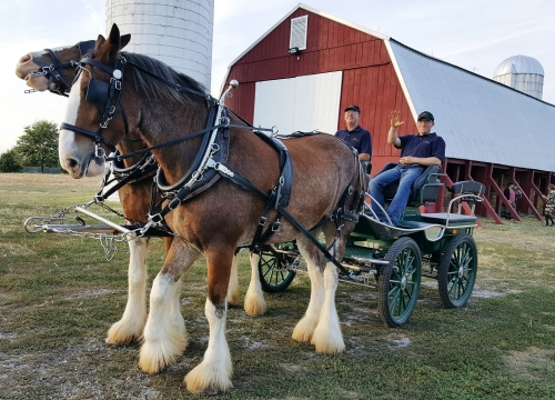 clydesdales-with-wagon-barn-1
