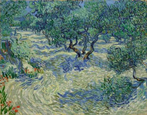 VanGogh Olive Trees