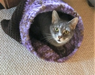 Cat Cave with Lulu head